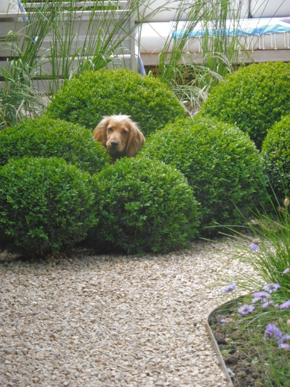 Private garden Cambridgeshire. A happy dog too!